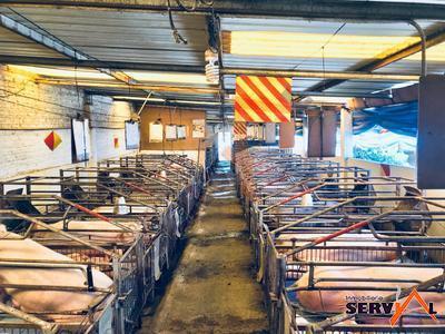 granja-porcina-en-venta-con-el-municipio-de-vinto