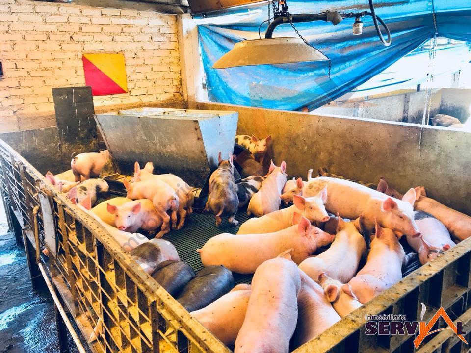 5-thumbnail-granja-porcina-en-venta-con-el-municipio-de-vinto